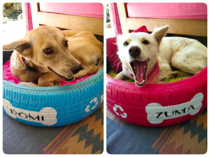 リサイクル犬ベッド
