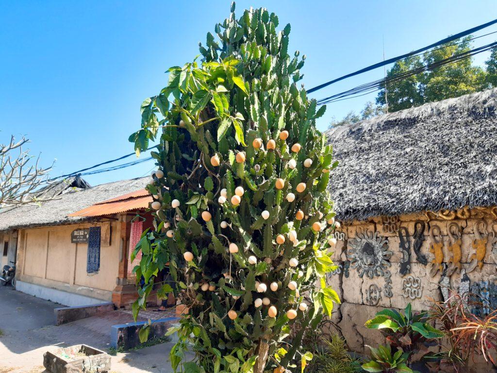 バリ島穴場の観光地バリ・アガの村トゥガナン村の木