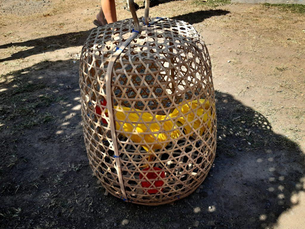 バリ島穴場の観光地バリ・アガの村トゥガナン村の黄色鶏