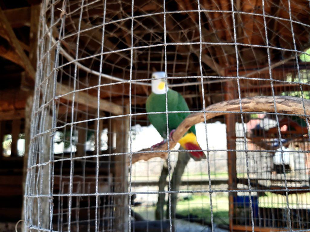 バリ島穴場の観光地バリ・アガの村トゥガナン村のラスタバード