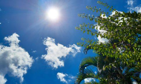 バリ島でデング熱にかかりました。