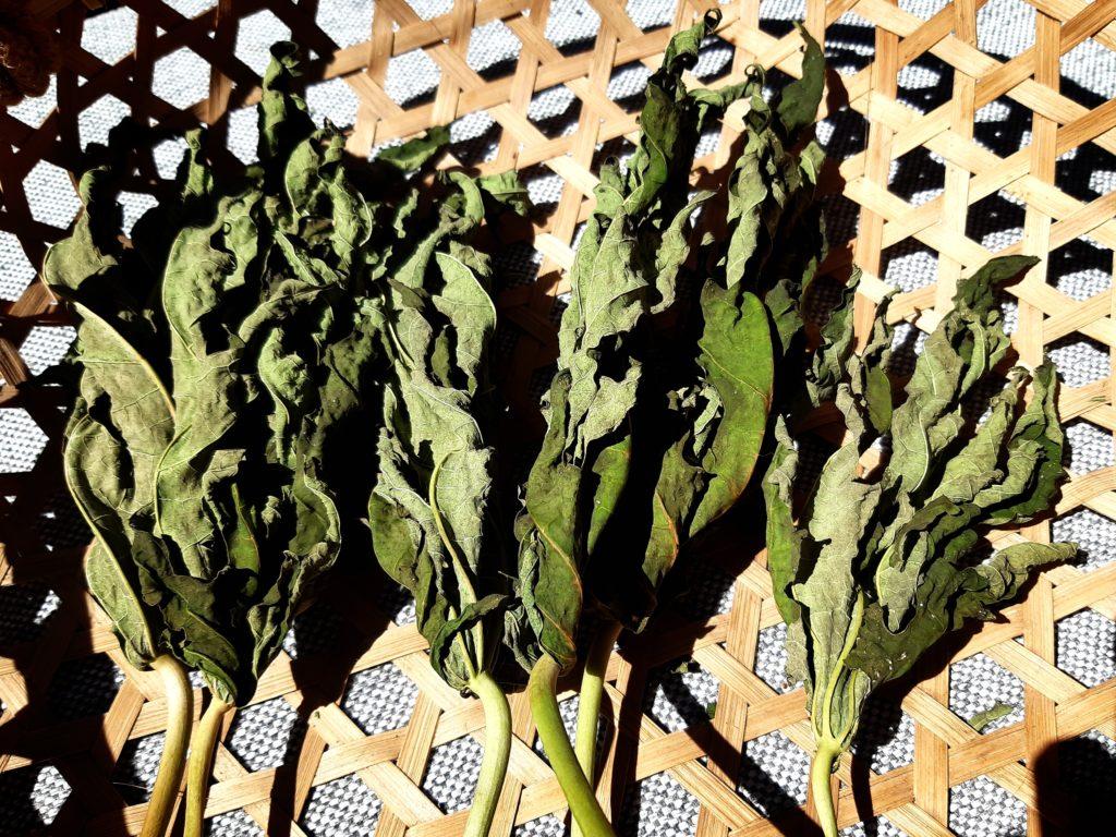 免疫力アップ!パパイヤの葉を乾燥させる